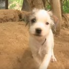 150813-Puppies