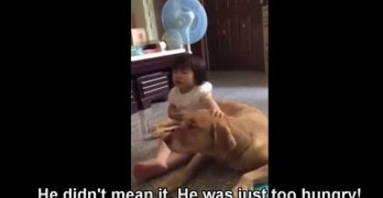Guilty Dog Gets the Cutest Defense Lawyer – His Human Sister