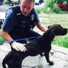 Kansas City Officers Rescue Abandoned Dogs