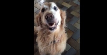 Dog Celebrates Positive News from Medical Test Results