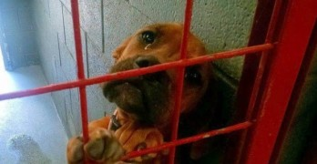 Photo: Crying Dog Gets Adopted