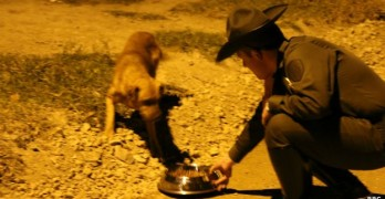 Police Officers Work Overtime Helping Stray Dogs