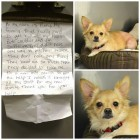 Tiny Dog Is Left at Shelter with Heartbreaking Note