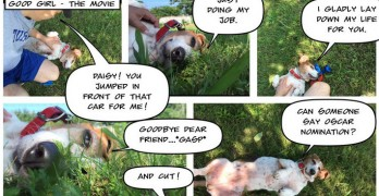 Basset Hound Brings Comic Relief With Personal Comic Strip