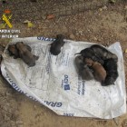 Eight Puppies Are Rescued from a Garbage Bin