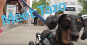 Video: Tazo's Best Day