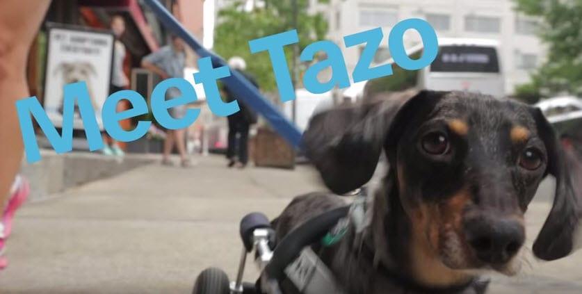 Dog S Best Day Tazo