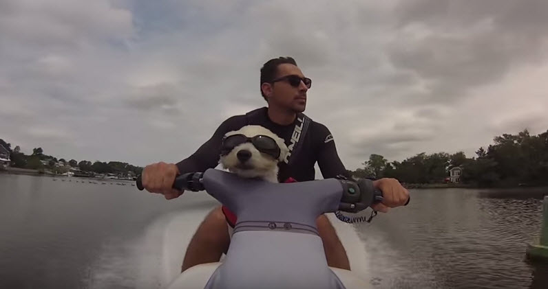 Dog Rides Jet Ski Life With Dogs
