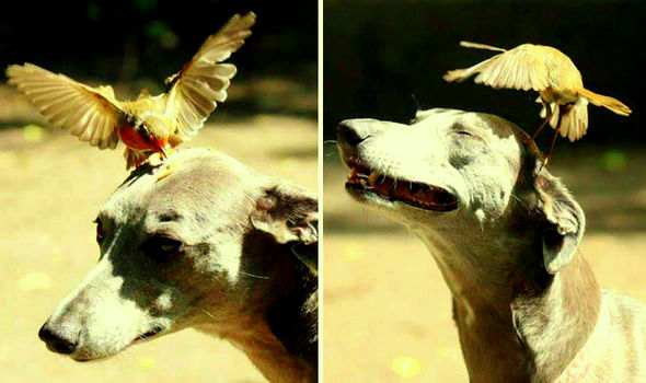 Dog Graciously Allows Bird To Eat Off Her Head