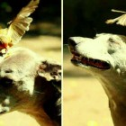 8.1.15 - Bird Eats Off Dog's Head2