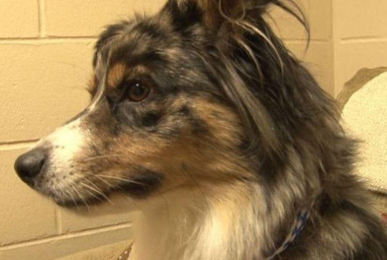 Lost Dog from Houston, TX found 900 Miles Away