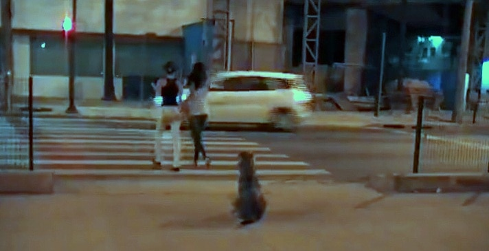 This Dog Is a Pro at Street-Crossing