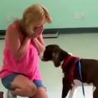Paralyzed Dog Stuns Mom by Walking Again