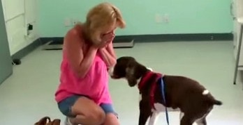 Paralyzed Dog Stuns Mom by Walking Again
