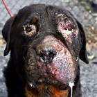 Forgotten Dog, George, Is Fighting for His Life