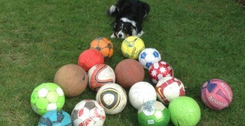 "Dog Gets ""Job"" Helping Youth Soccer Club Find Lost Balls"