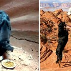 Hiker Risks His Life to Save Puppy Abandoned in Canyon