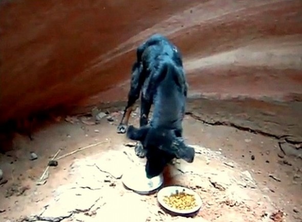 8.20.15 - Hiker Saves Puppy in Canyon2