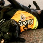 Black Labs Stop, Drop, & Roll to Teach Kids Fire Safety