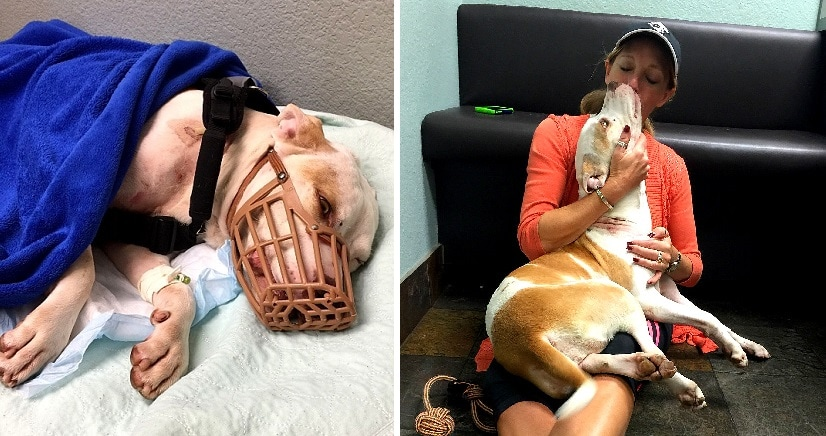 Dog Shot & Expected to Die Is Now Walking