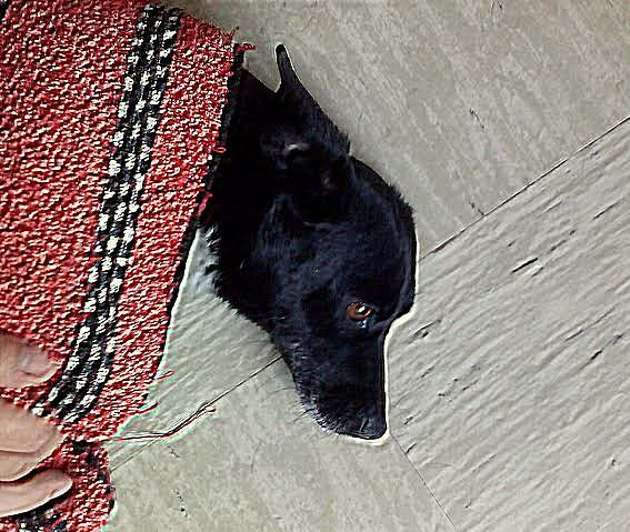 8.22.15 - Thunder Dog in Hungary2