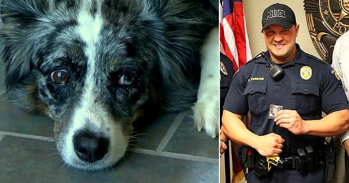 Police Officer Soothes Dog Who Bit Him
