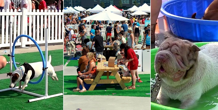 Barkfest 2015 – THE Best Party of the Year