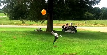 This Dog Is Awesome with a Balloon
