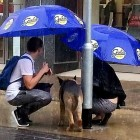 8.26.15 - Kind Couple Shelters Dog During Rainstorm1