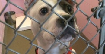 URGENT! Packed Shelter may Have to Euthanize