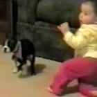 Baby's First Steps Interrupted by Dog Poop