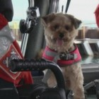 Coast Guard Station in Milwaukee Adopts Stray as Mascot