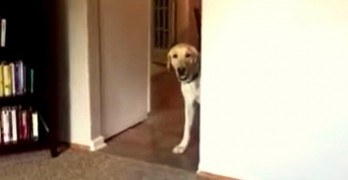 Dog Conquers Fear of Carpet