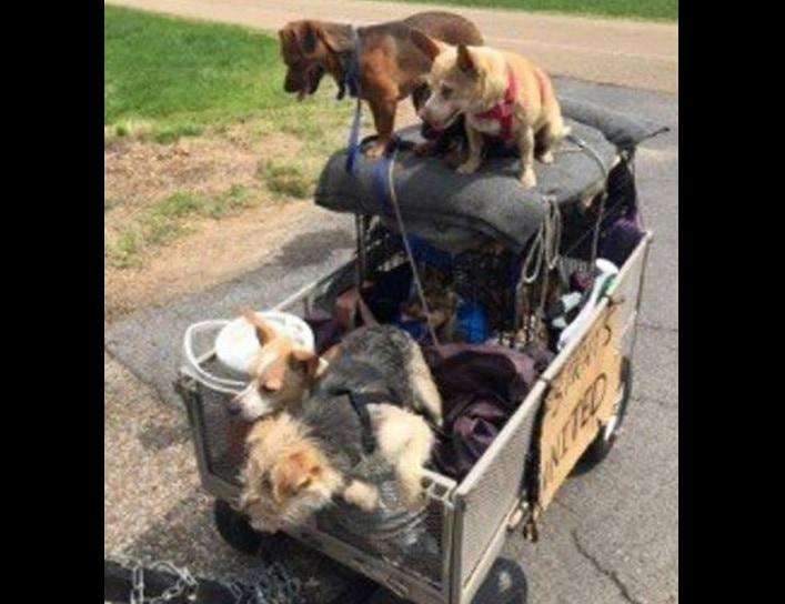Man Finally Finds Home for Himself and His 11 Rescued Strays