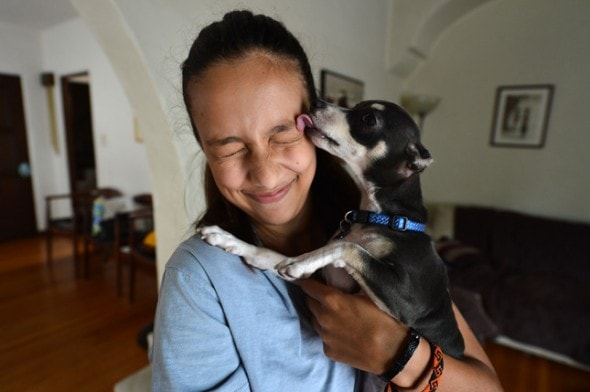 ***MOTHER REQUESTED THAT CITY OF RESIDENCE NOT BE INCLUDED*** Chloe Levenson-Cupp, 12, gets a kiss from her newly adopted puppy 'Buddy' on Tuesday, Aug. 4, 2015. Buddy is the Chihuahua that was found in Antioch earlier this year with severe chemical burns to both ears and the entire length of his belly. (Kristopher Skinner/Bay Area News Group)
