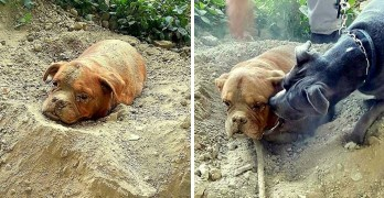 Dog Buried Alive Saved Because of Another Dog