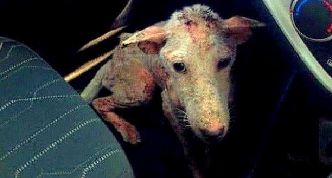 The Rescue & Recovery of This Dog Will Blow Your Mind