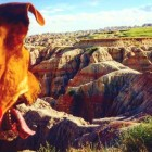 A Cross-Country Road Trip Cured My Dog of Her Neuroses
