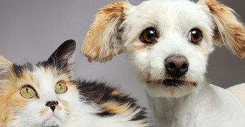 Clear the Shelters, Give a Homeless Pet a Forever Home