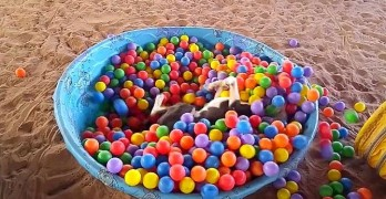 Silly Dog Goes for a Swim in a Ball Pit