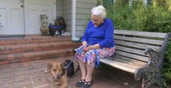 Dog Lost in Car Crash Walks Back Home Seven Months Later