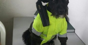 Tiny Police Dog Patrols City Streets