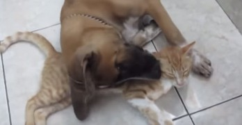 Stray Cat and Dog Are Best of Friends