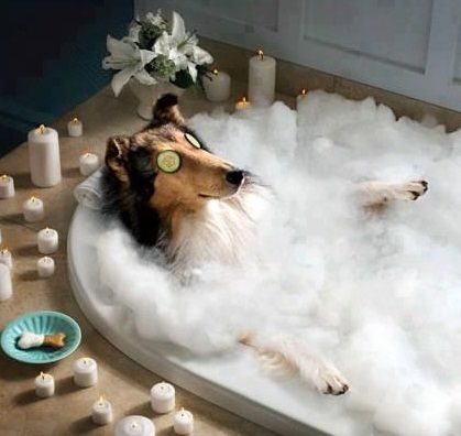 We hope you relaxed as much as the following dogs. Relaxing Dogs