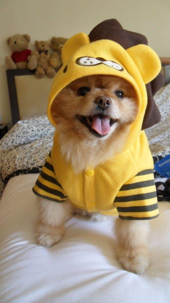 Most Inspiring Baby Brown Adorable Dog - 150912-BabyDog5  Pictures_283488  .jpg