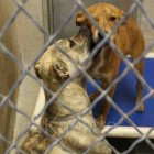 Scared Puppy and Mom Hope to Get Out of Kill Shelter Soon