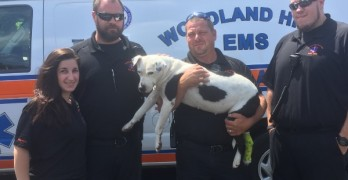First Responders Rescue Dog That Jumped Off Bridge