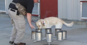 Horton the Arson Dog Goes into Retirement