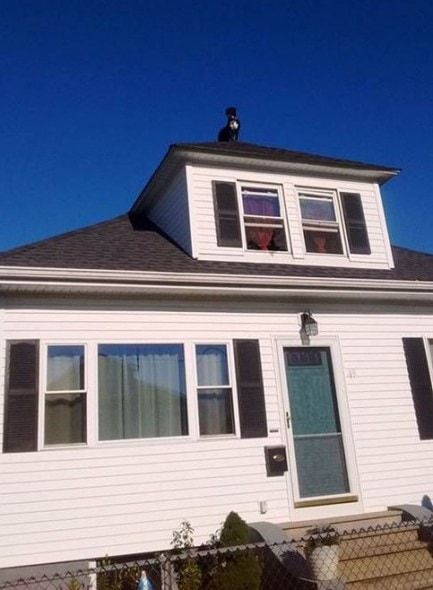 150915-RoofDog