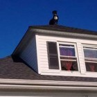 Home Alone Dog Chills on Home's Roof